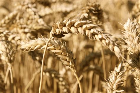 4 complex carbohydrates 4 myths about complex carbohydrates and the low carb