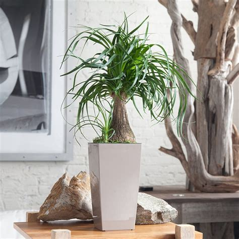 indoor plants for cats 6 stylish houseplants that are safe for cats and dogs