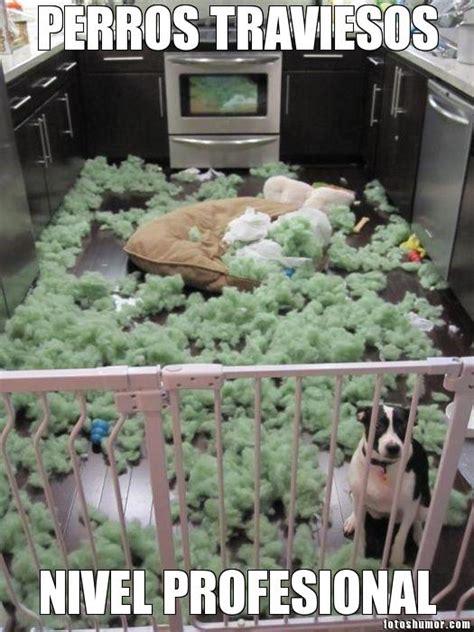 perro travieso las fotos m 225 s divertidas con perros fotos de humor