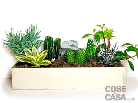 cassette per piante utilizzo cassette da vino come fioriere da piante grasse