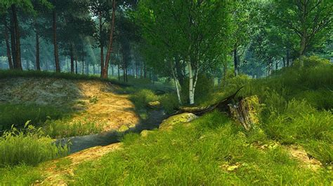 summer forest wallpaper  cool wallpapers