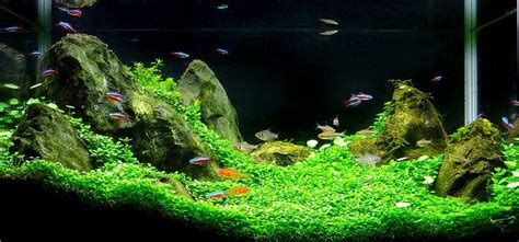 Most Beautiful Aquascapes by Aquarium Fish Beautiful See Grass Aquascape Aquarium