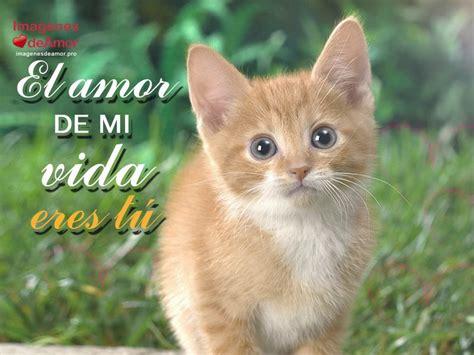 imagenes con frases bonitas de gatitos 8 im 225 genes de gatitos tiernos con lindas frases de amor
