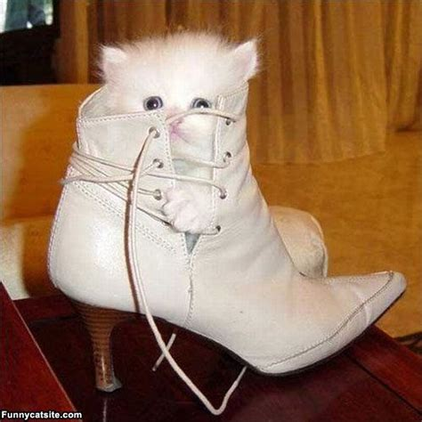 funny cat in shoes shoe cat