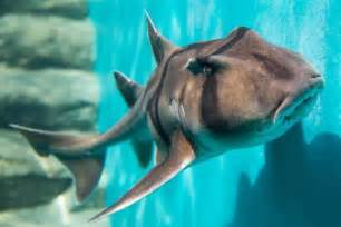 baby shark x2 puppy dogs of the ocean port jackson sharks added to
