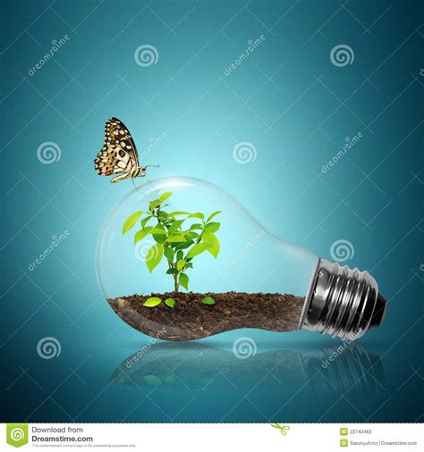 butterfly light l butterfly light bulb vector illustration cartoondealer