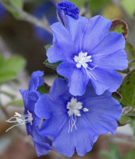 things in a backyard the nature of things backyard nature wednesday garden blues chsbahrain com