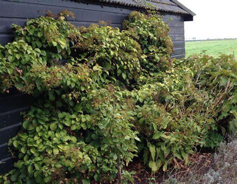 Wanneer Snoeien Hortensia by Snoeien Tuincursus With Wanneer Snoeien Hortensia