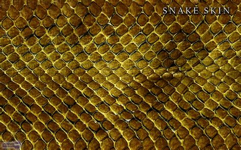 black snake skin wallpaper wallpapersafari