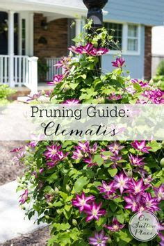 gardening on the porch pruning 1000 images about flower pot decor on front