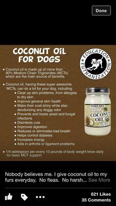 coconut for fleas on dogs pets animals on 497 pins
