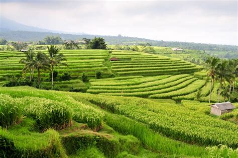 The Art of Rice fields in Indonesia