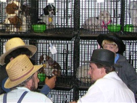 amish puppy mills ohio nys citizens against puppy mills