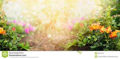 garden flowers a z orange roses on flowers garden background banner stock