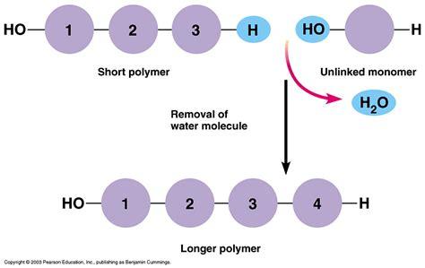 dehydration synthesis ihmc cmaps 2