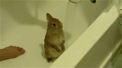 rabbit bathroom gif 12 insanely cute bunny gifs that will make you want to get one