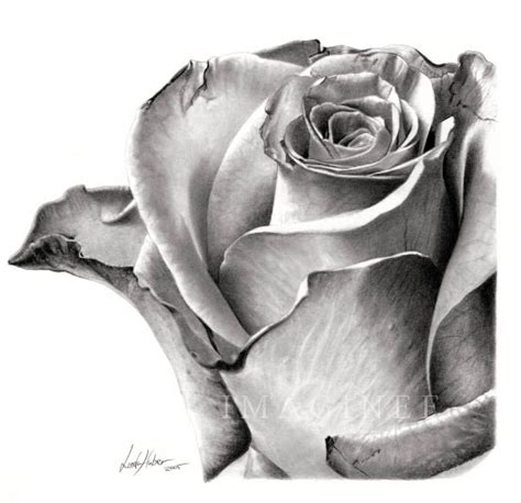 Drawing Roses by 35 Beautiful Flower Drawings And Realistic Color Pencil