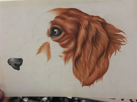 not long left to go on this dachshund portrait for a