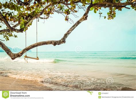 tropical swing wooden swing on tropical beach stock photo image 67449357