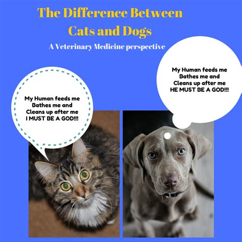 difference between cats and dogs the difference between cats and dogs a veterinary medicine perspective the animal