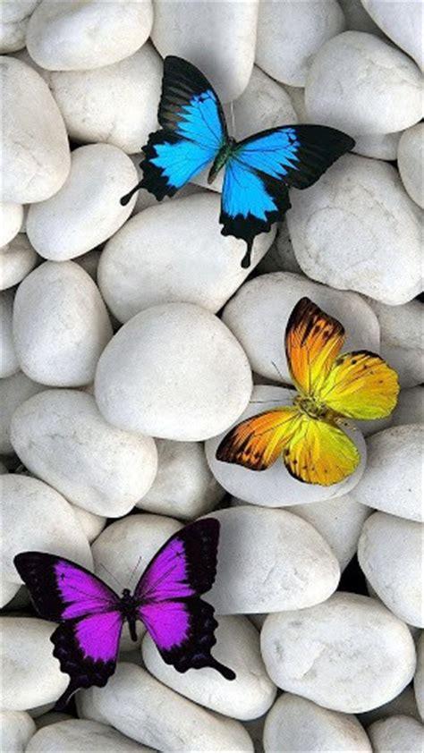 wallpaper iphone 6 butterfly papillon fond d 201 cran anim 233 pour android appszoom