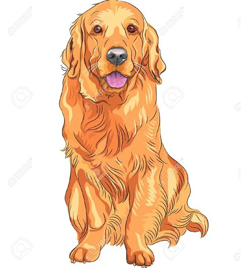 golden retriever clip golden retriever clipart clipground