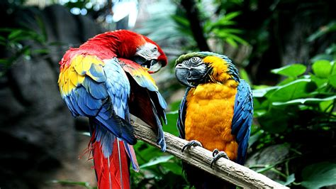 Hp Ara macaw hd wallpaper and background image 1920x1080 id 449423