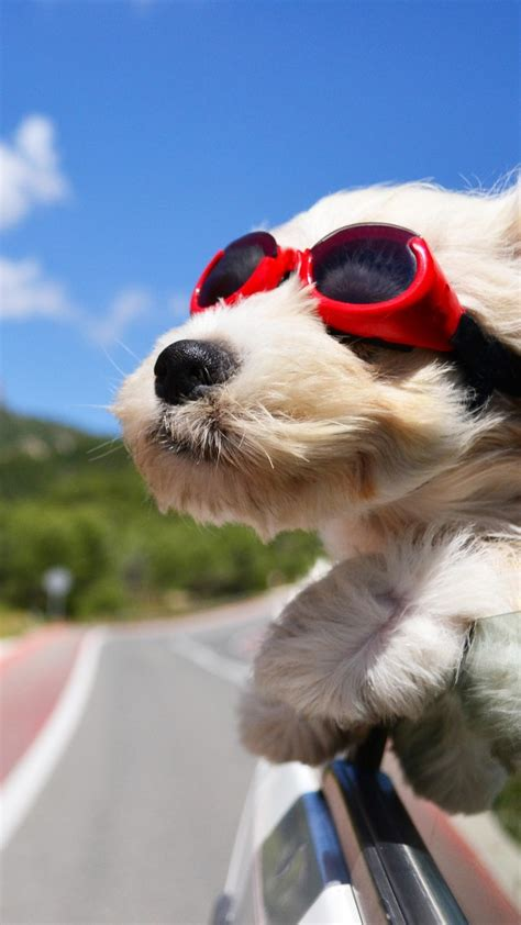 wallpaper dog puppy road funny glasses hair sky