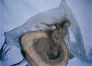 Buntat Kerang koleksi barang lama buntat lipan rm2500 00