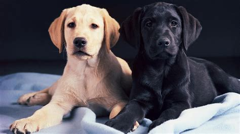 what age can dogs puppies at what age can a breed reference