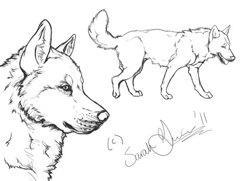 siberian husky coloring book stress relief coloring book for grown ups animal coloring book books siberian husky lineart by airhead77 on deviantart