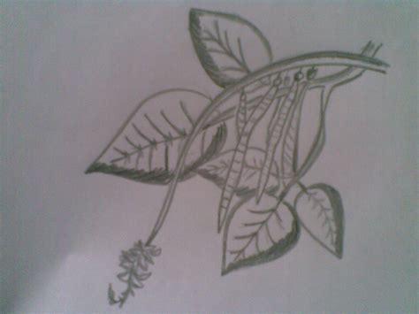 karya seni rupa menggambar ilustrasi tumbuhan flora dan hewan fauna