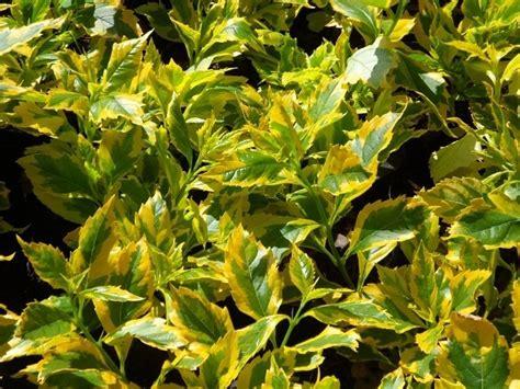 precios de plantas para jardin 10 plantas para jard 237 n 75 00 en mercado libre