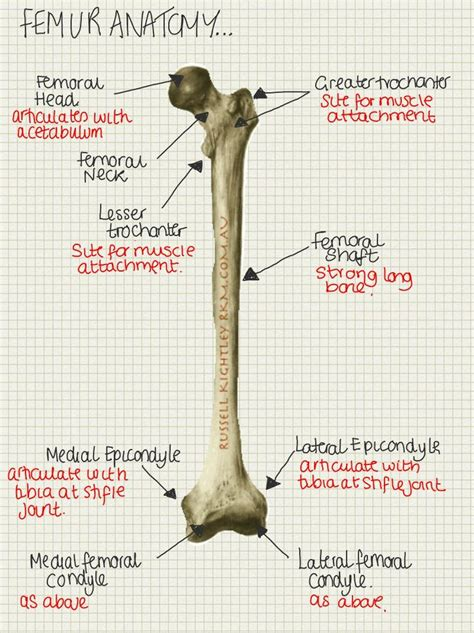 483 best images about veterinary and some