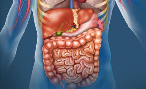 alimenti ricchi di zinco 10 alimenti ricchi di zinco pazienti it