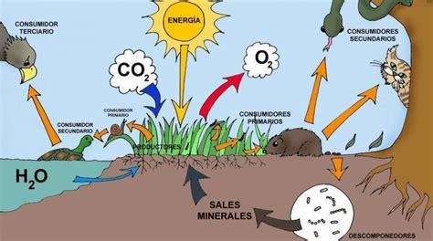 cadenas troficas en ecosistemas ecosistema concepto tipos componentes y ejemplos