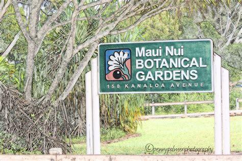 Nui Botanical Gardens by Exploring Wailuku Part Iii Of Things To Do Palmer