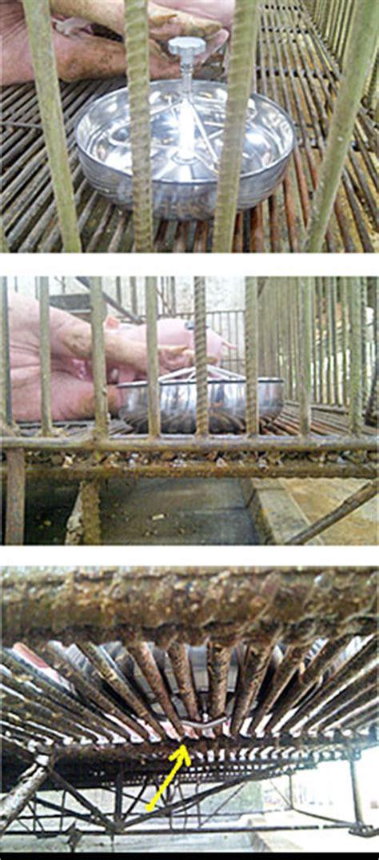 piglet feeder artupic