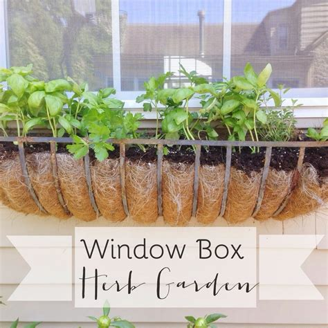 window box herb garden how to grow herbs in a window box herb garden design