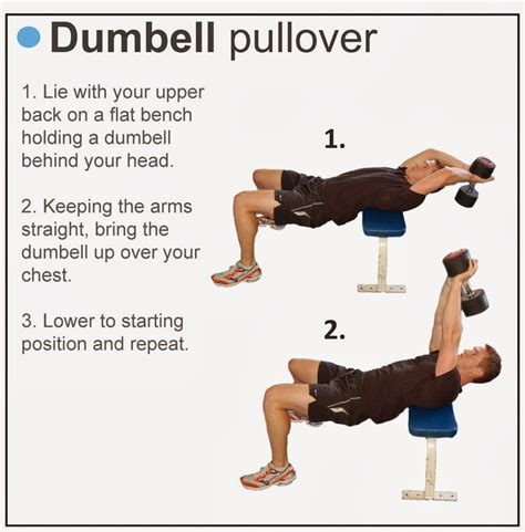 bench dumbbell pullover tricks site how to get big chest