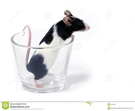 mouse for glass mouse in a glass stock image image of holiday annual