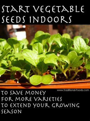9 vegetables that start with b 29 best starting seeds images on