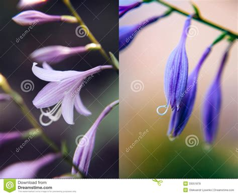 Bell Up blue bell flower up royalty free stock image