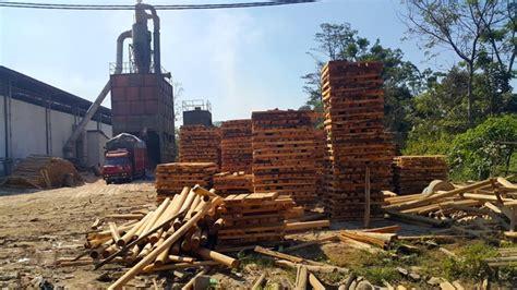Bibit Sengon Boyolali petani hutan lestari dari boyolali mongabay co id