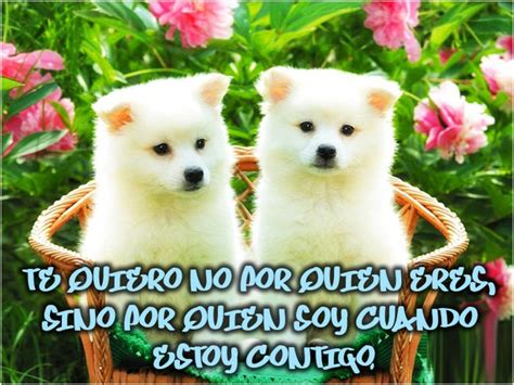 imagenes de perritos perritos tiernos con frases www pixshark com images