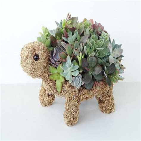 succulent turtle 17 best images about all things turtle on pinterest