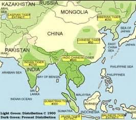siberian tiger info