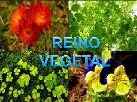 imagenes reino animal imagenes del reino vegetal imagui