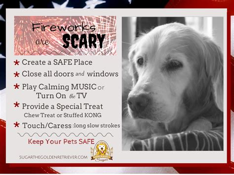 fireworks dogs fireworks are scary keep your pets safe golden woofs