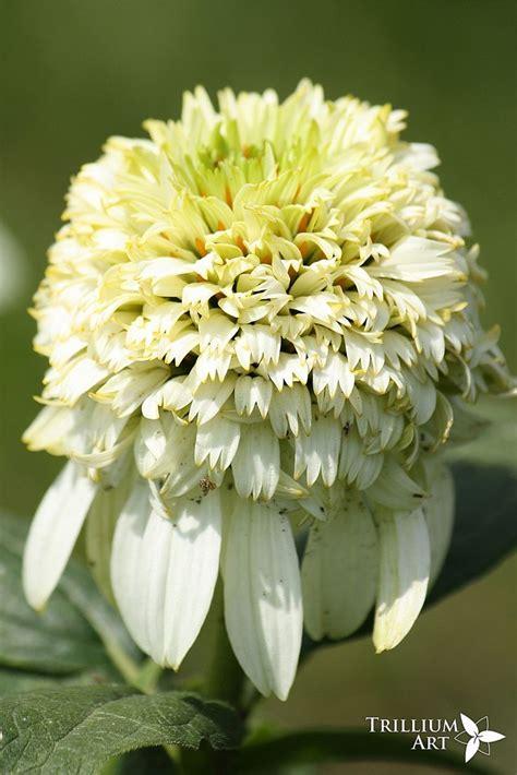 scroll   green  white garden images